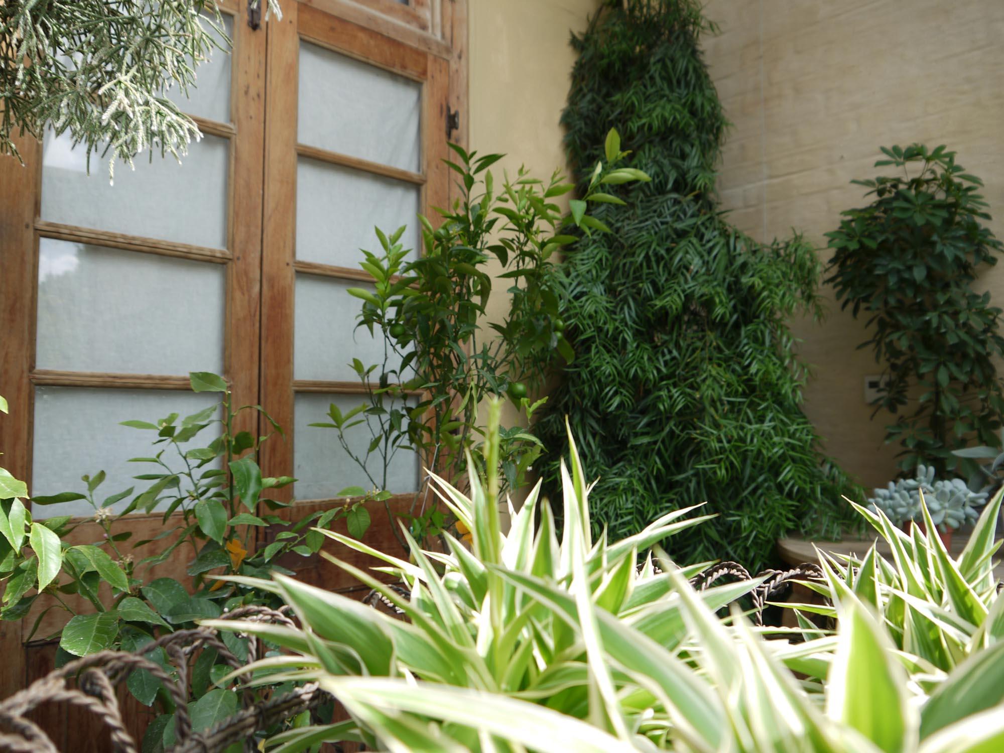 Planten Op Kantoor : Kabinet pepijn verheyen plantentips voor een groen kantoor
