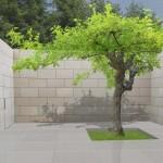 2000_patio-modern-tuin-solitair-dakboom