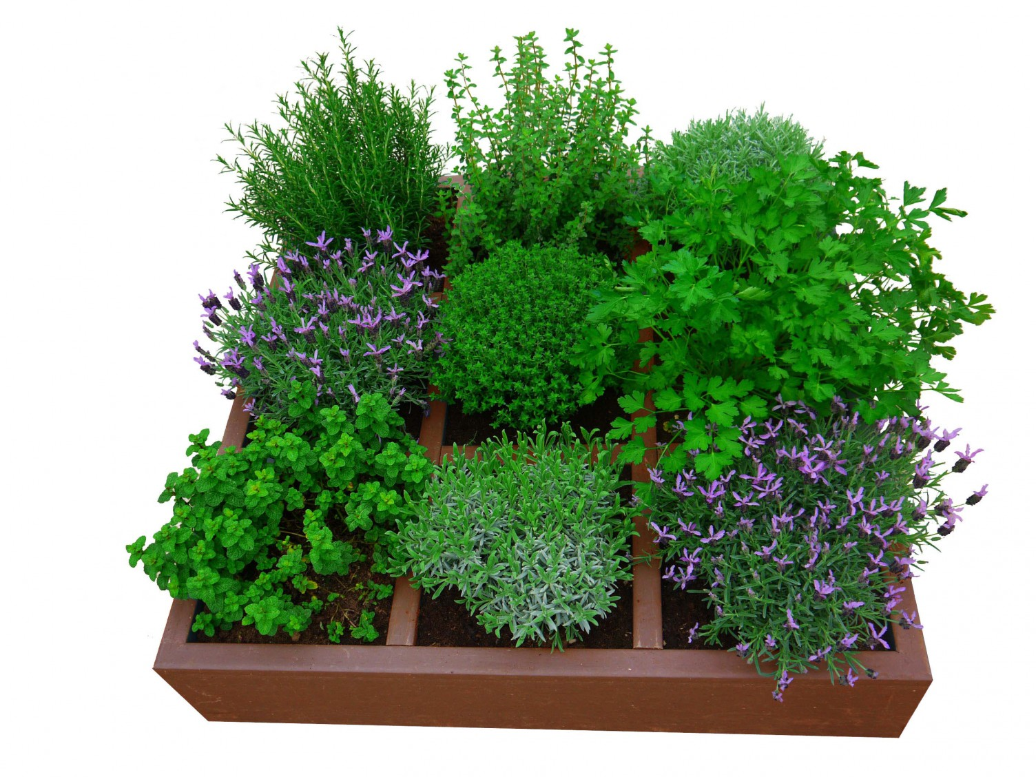 Vierkante Meter Tuin : Kabinet pepijn verheyen tips voor een vierkantemetertuin